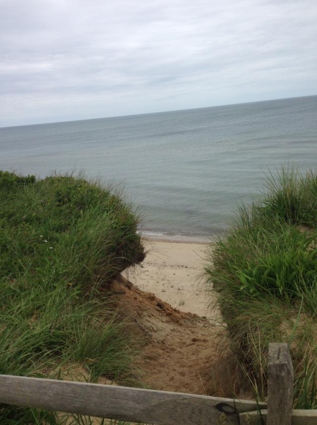 dog park beach